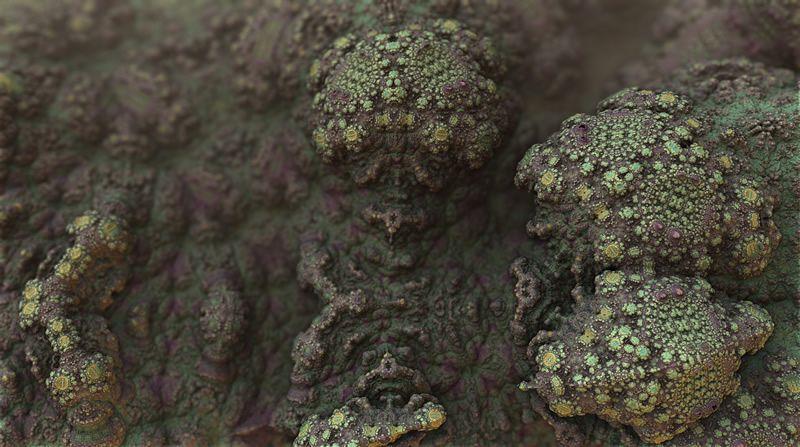 mold bacteria